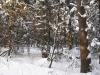 Зима в Монино (2)