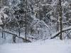Зима в Монино (4)